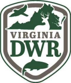 Contact a natural resources professional virginia forest for Vt fish and game license